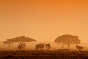 Sunset with silhouetted trees, Amboseli National Park