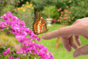 Schmetterlinge 168