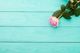 Pink rose on blue wooden background - 83120318