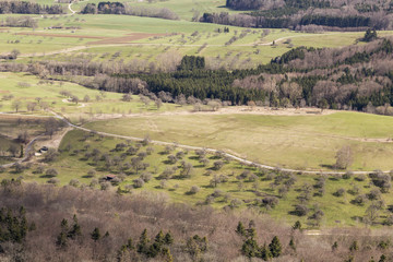 Aerial View of Trees and Vegetation in Spring