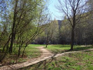 Городской двор и тропинка весной с зеленеющими деревьями