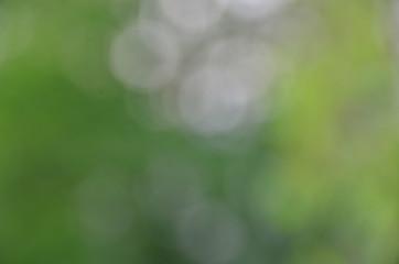 greeen background