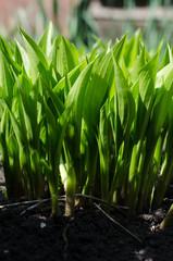 Spring green grass outdoor