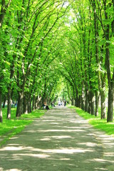 park with green trees