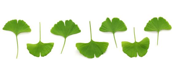 ginkgo biloba leaves on white background