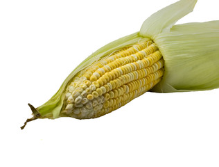 One on ear of corn isolated on a white background