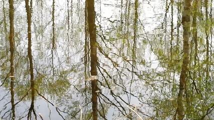 Reflexion in a wood pond