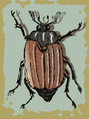 vintage background with beetle