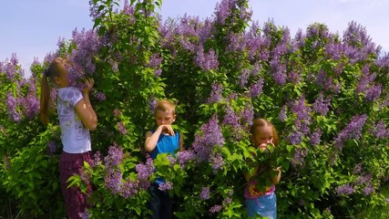 Children around the lilac bushes and smell the flowers