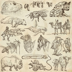 Animals - Freehand sketches on old paper