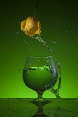 тюльпан и вода