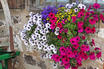 fiori alla finestra