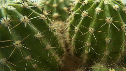 Cactus in a pot at home. The camera moves around