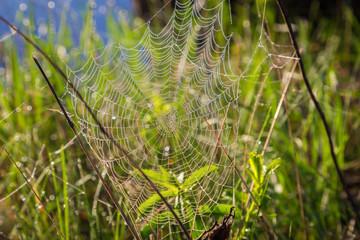 Shiny dew on spiderweb