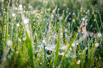 Morning dew on spiderweb