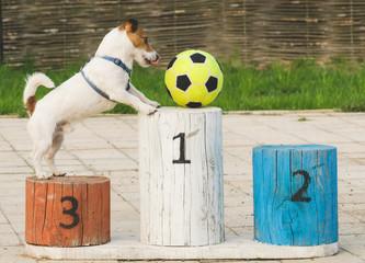 Dog playing football on pedestal