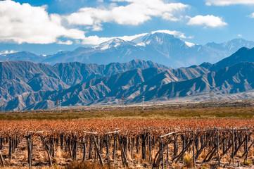 Volcano Aconcagua and Vineyard. Mendoza, Argentina