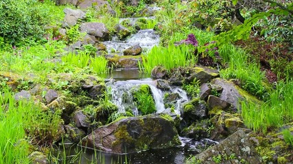 Small stream with fresh spring growth, footage