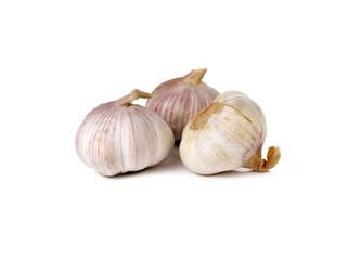 whole garlic bulb on white background