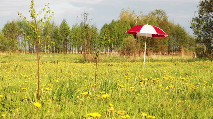 umbrella on meadow