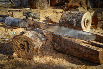 Old chainsaw stands in timber