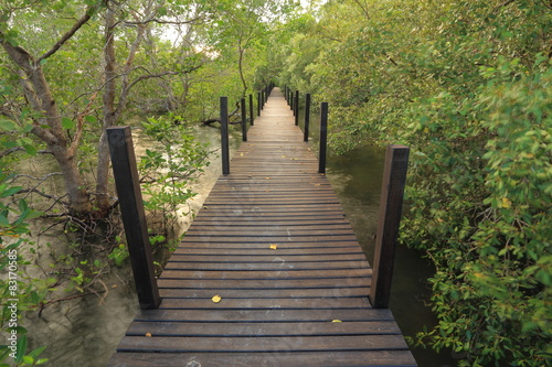 Fototapeta Mangrove forest and wood bridge