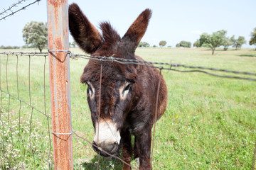 Brown donkey in the field