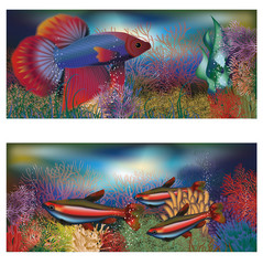 Underwater banners tropical fish, vector illustration