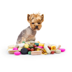 Dog with pills