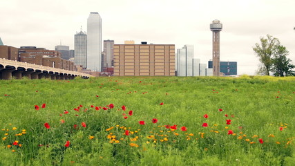 Dallas Texas City Skyline Downtown Trinity River Wildflowers