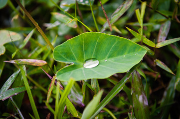 Green leaf with Drop