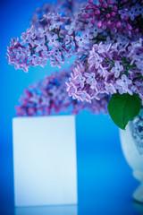 beautiful spring lilac
