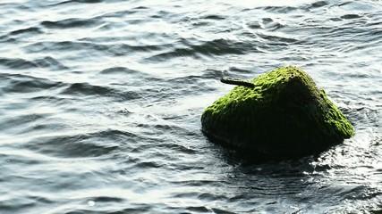 Ostsee mit Wellenbrecher