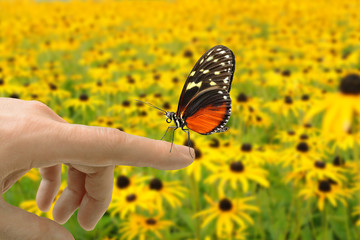 Schmetterling 155