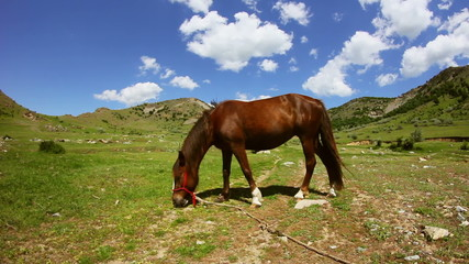 Brown horse grazing in the mountain valley