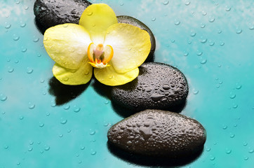 Spa concept. Flower  orchid and stone.