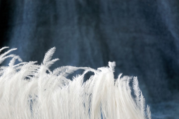 white feather on blue gray background