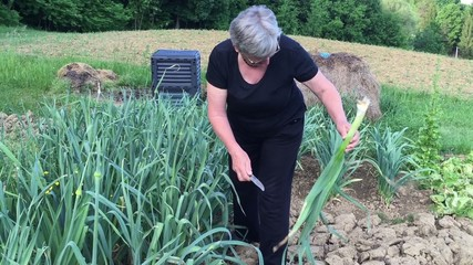 Woman with gray hair cleaning leek in the garden