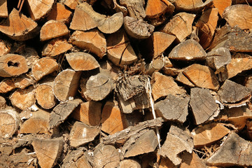 Chopped firewoods stacked in rows