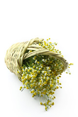 Chamomile in wicker basket isolated on white background