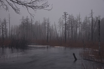 misty spring morning in the Karelian forest