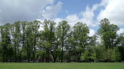 Lime trees in Calthorpe Park, Birmingham, England.