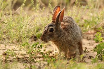 Conejo a contraluz