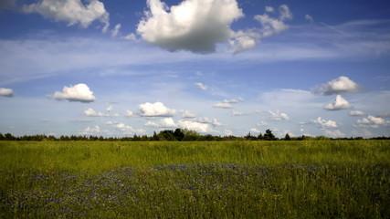 Clouds Pass Over Wild Texas Blue Bonnet Wildflowers