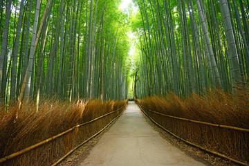 bamboo groove © porbital