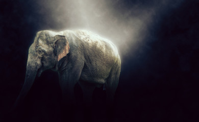 HDR photo of elephant