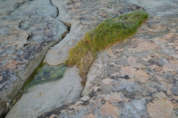 Cracked stones with grass in coastal area