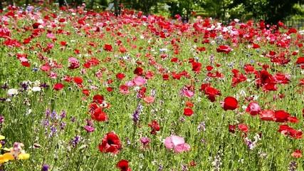 野の花咲き乱れる