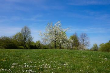 Frühlingswiese und blauer himmel