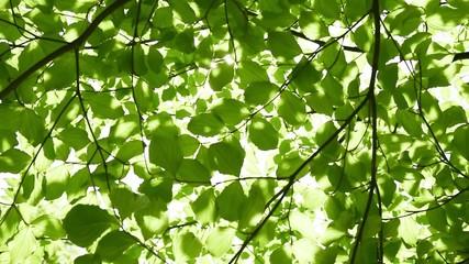 新緑の木洩れ日